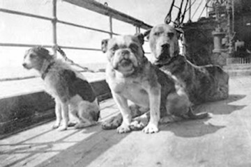 One-hundred years ago, companion dogs were among the victims and survivors of the Titanic.