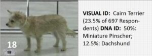 Dog-18_Voith-Interobserver-Reliability-Study_0