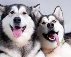 Cloning Shows That All Dogs Are Individuals