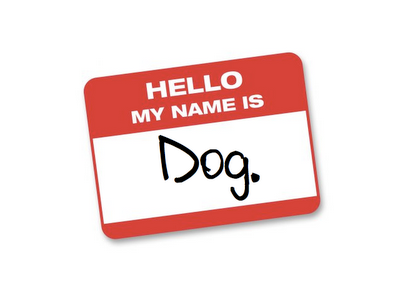 Florida animal services agency strikes breed labels from kennel cards and website