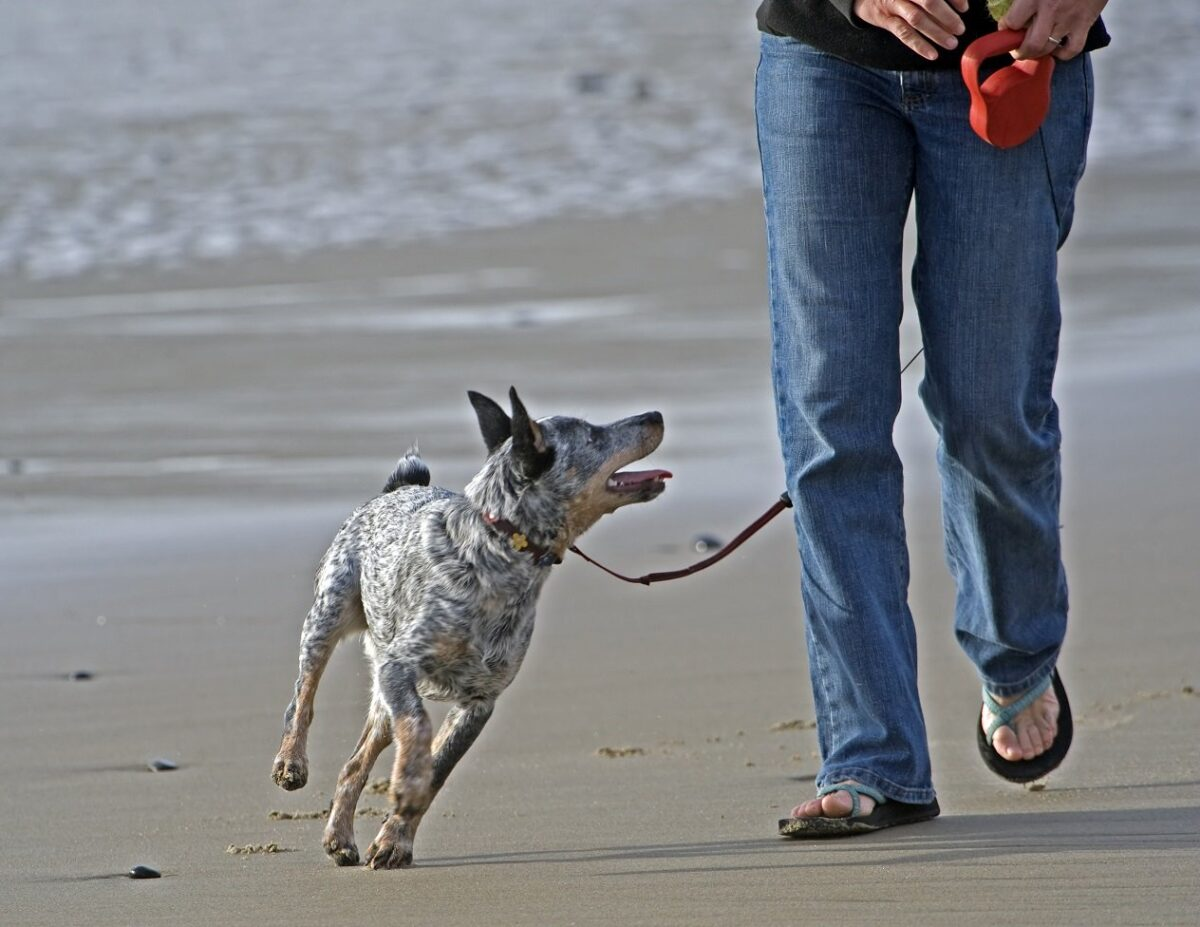 Dog Bite Prevention Week Fact Sheet: Companionship is the best prevention