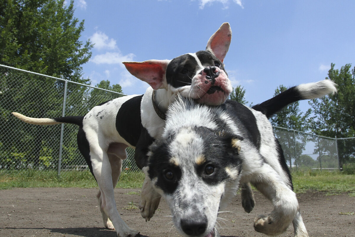 Welcome to the Dog Park: No Dogs Allowed