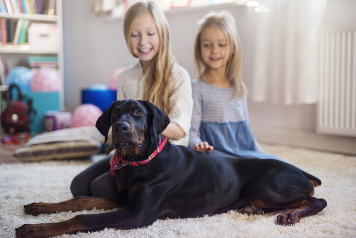 Red herrings and just plain lies: Insurance companies vs. dog loving families