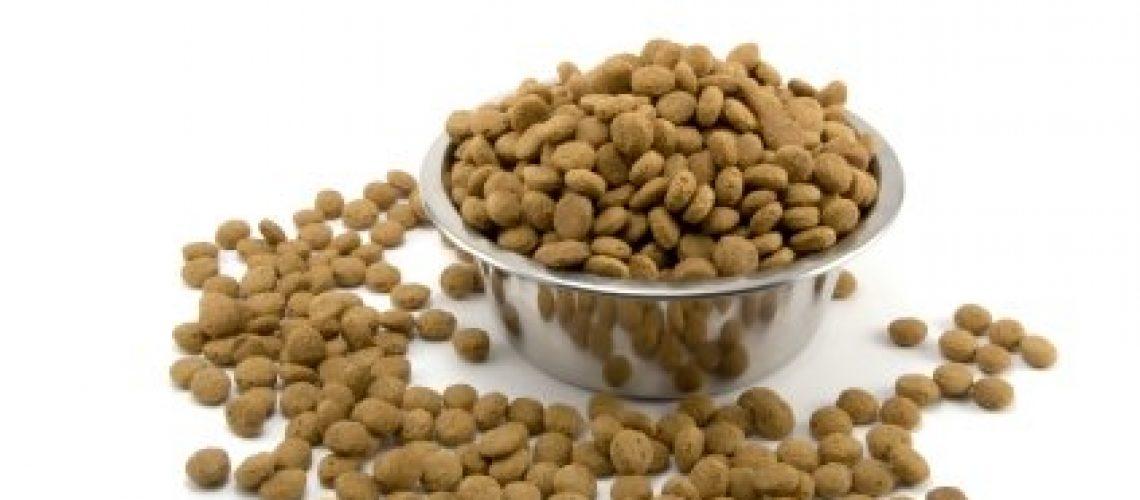 Dog-Food-Bowl_0
