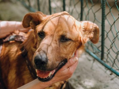 people hands caress brown old dog in city street, sweet emotions. person hugging scared sweet doggy with sad eyes. homeless dog looking for home. adoption concept