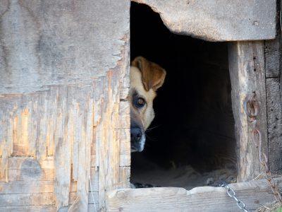 dog-in-a-dog-house-PJU8Z7K