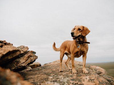 happy-dog-T2LGCVQ