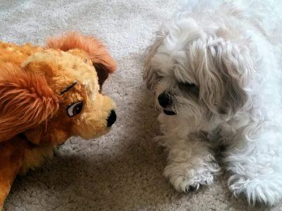 senior-pet-with-poor-eyesight-wonders-what-the-oth-HZZ4GU3