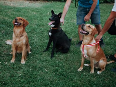 trained-dogs-GBMTSS8
